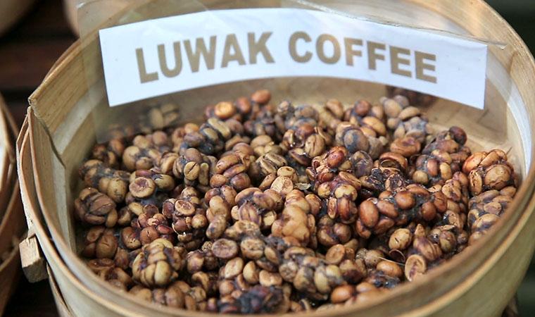 Coffee Kopi Luwak