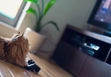 Ігри на iPad для котів