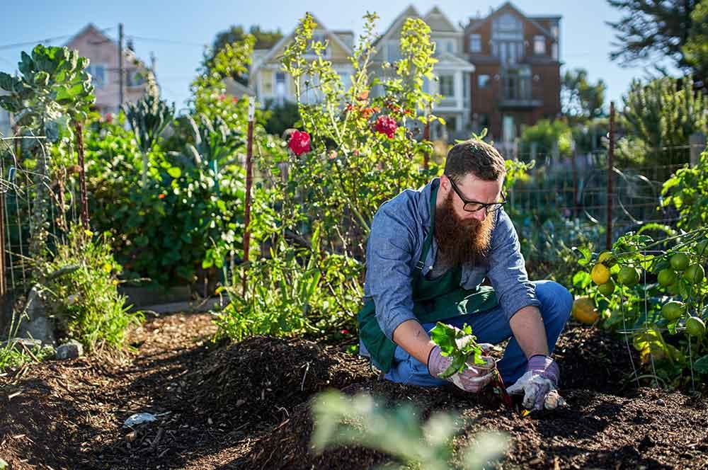 Садівництво як хобі