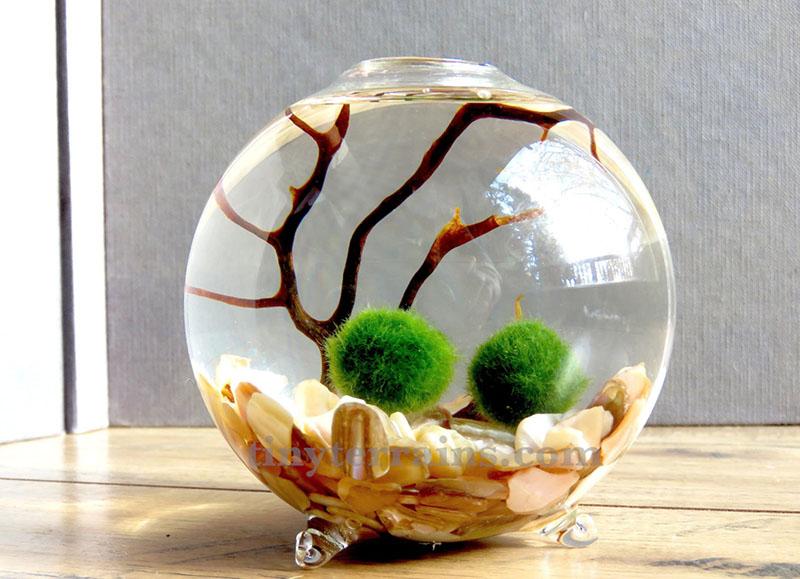 Акваріумний мох Марімо