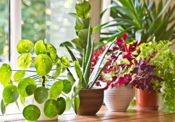Незвичайні кімнатні рослини
