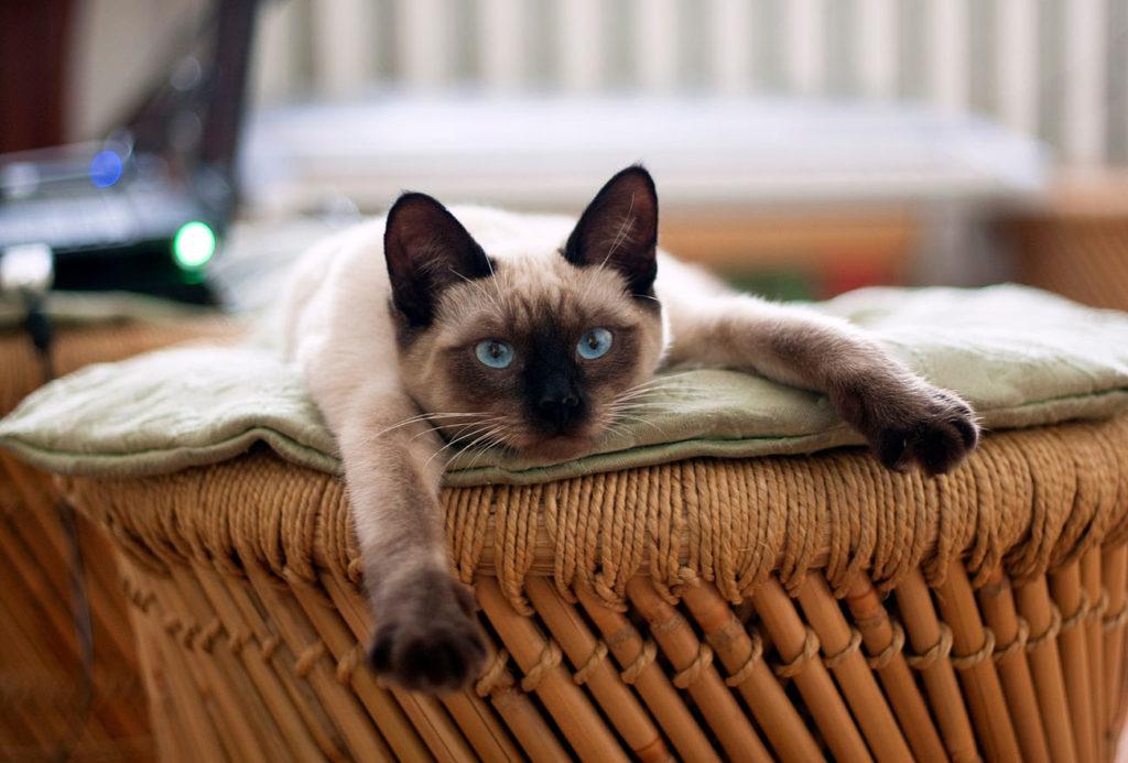 Як правильно гладити кота