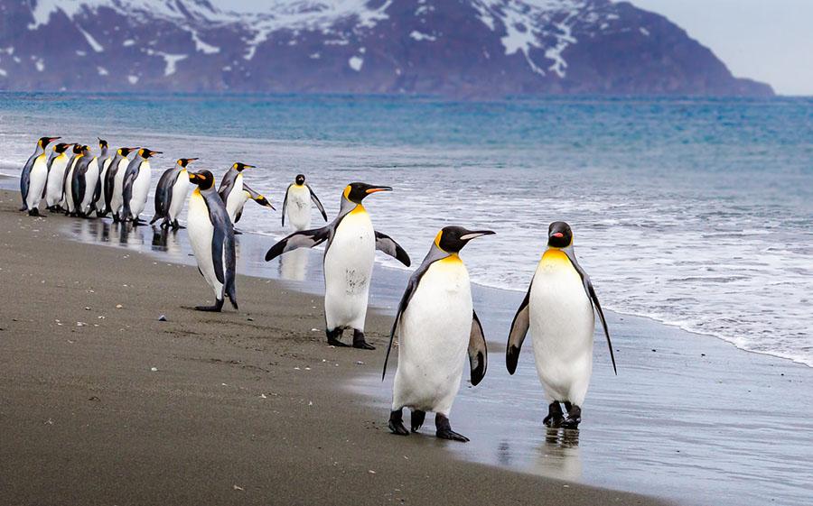Пінгвіни на березі моря