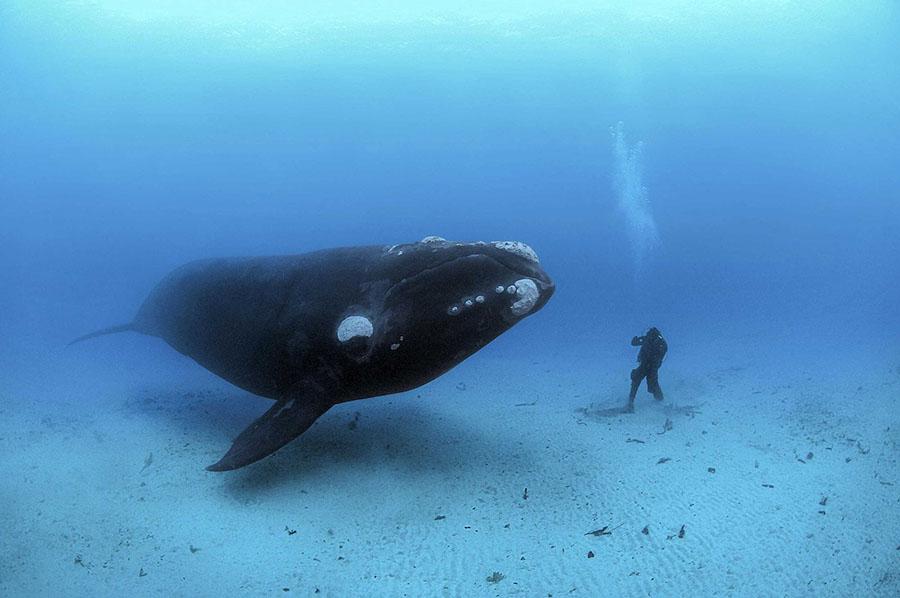 Синій кит і людина-водолаз