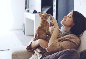 Переваги бути власником кота