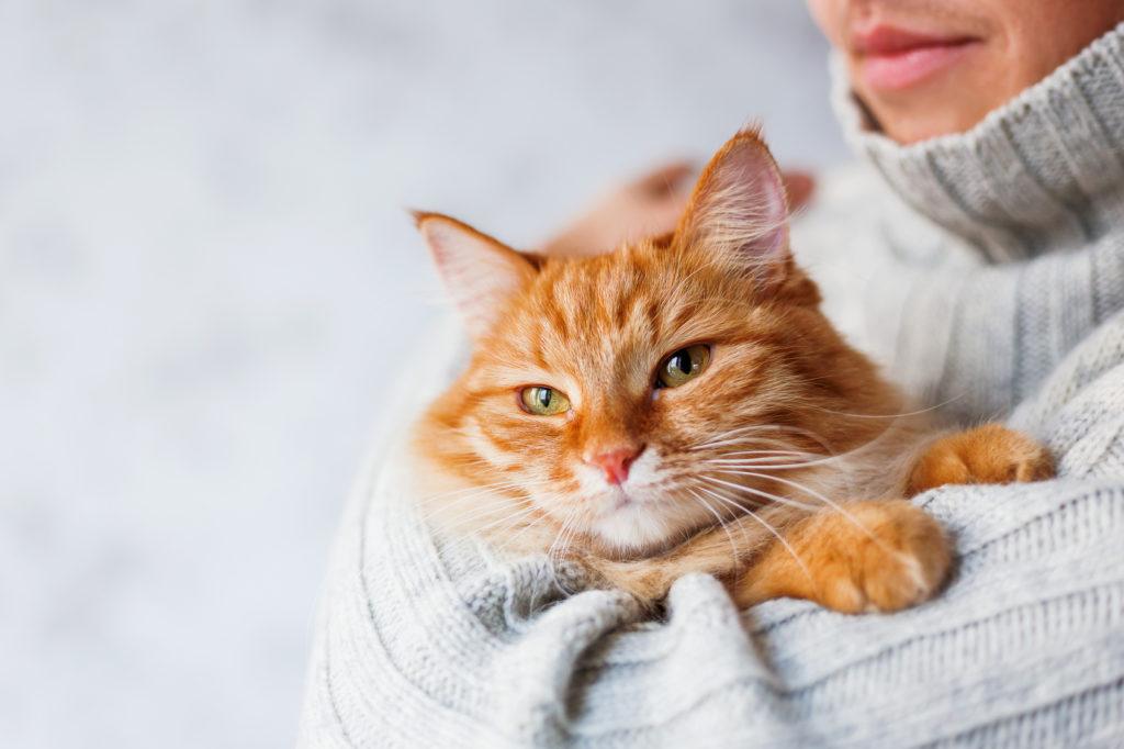 Дружба з котом