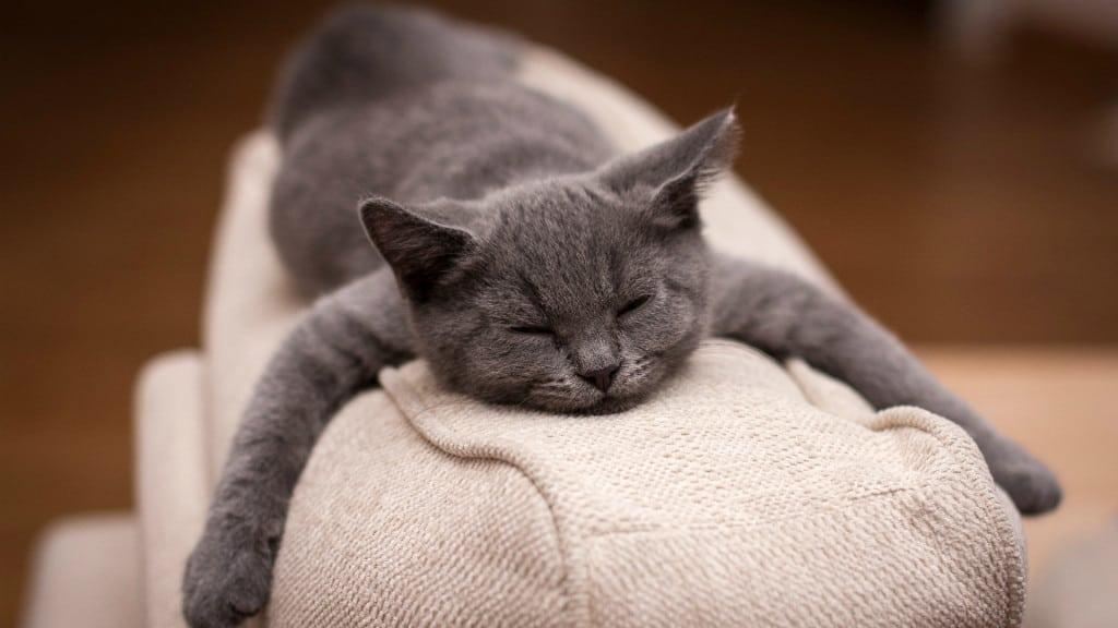 Кіт спить на дивані