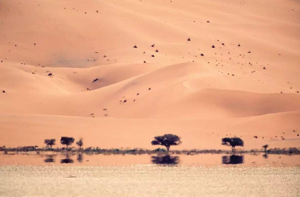 Міраж в пустелі