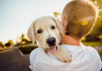 Для чого заводити вдома собаку