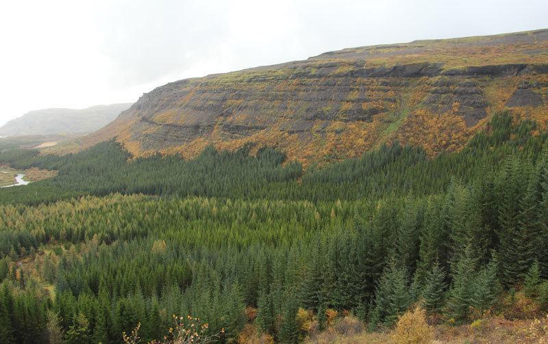 Як виглядає ліс в Ісландії