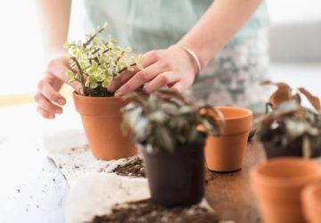 Домашні рослини, які корисні для здоровя