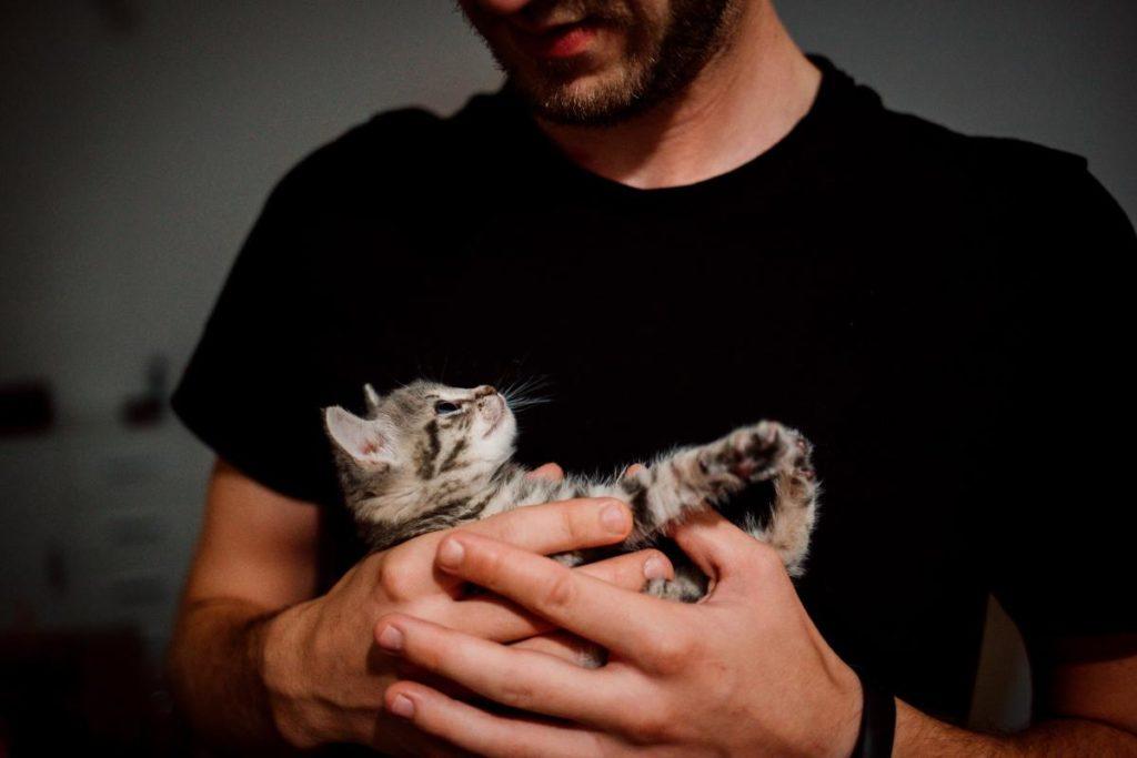 Завести вдома жінку чи кота