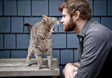 Завести кота замість чоловіка