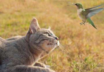 Світ очима тварин