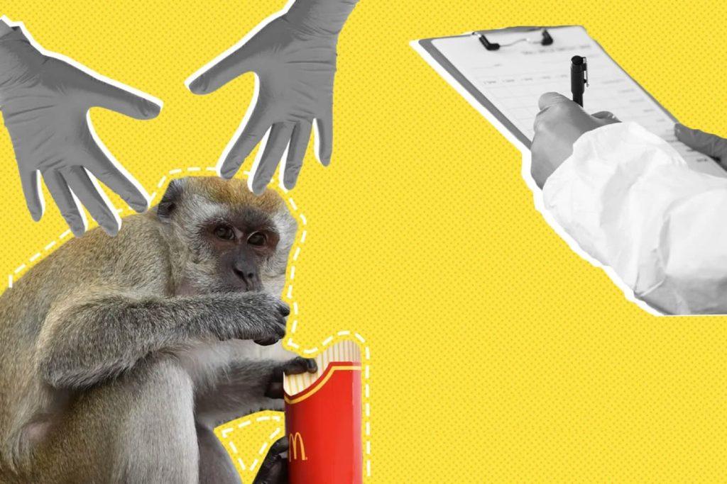 Експеримент з мавпами в США
