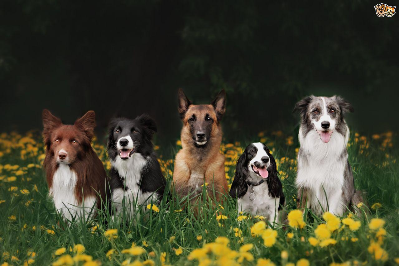 Такі різні породи собак