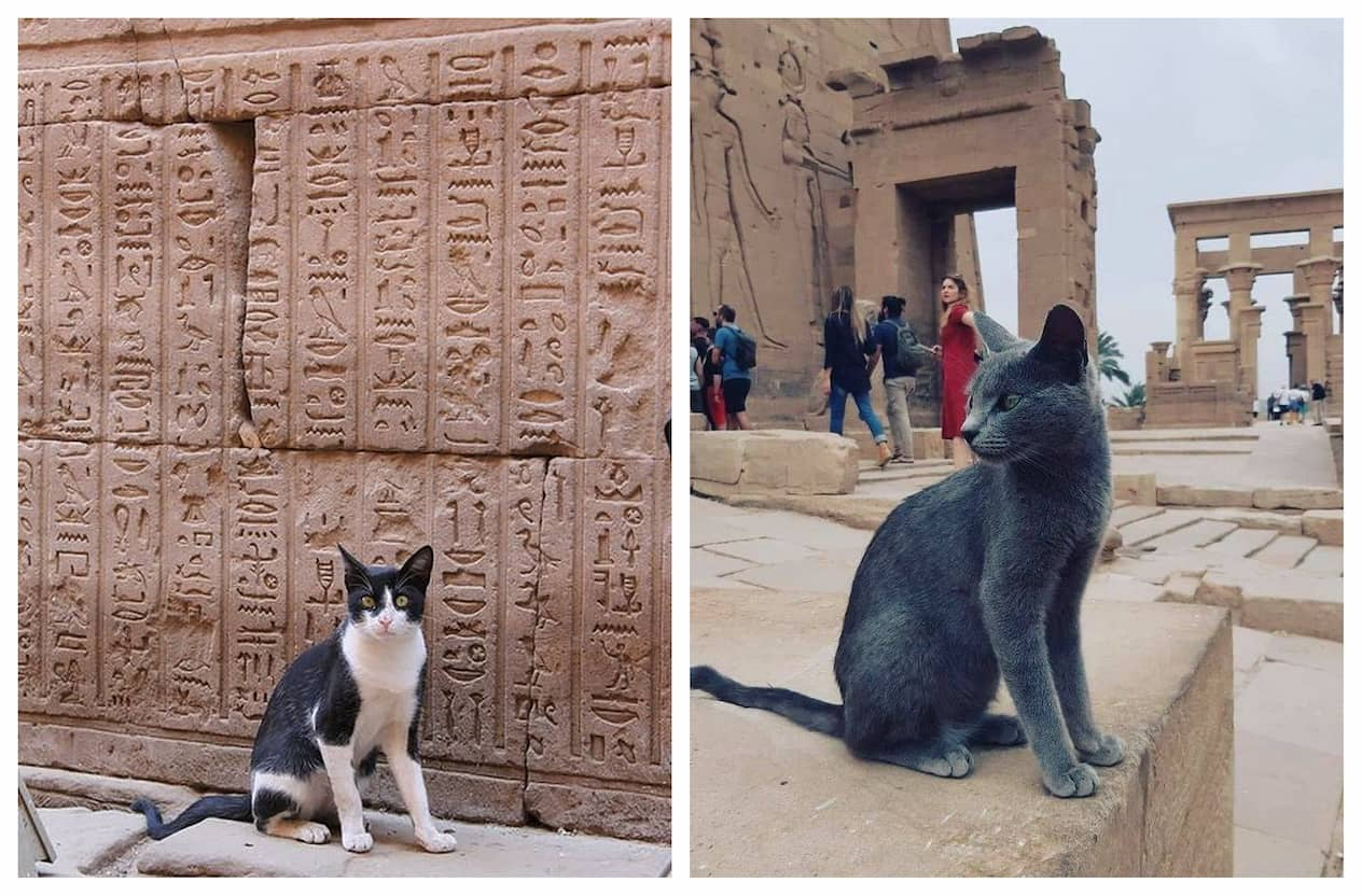 Коти в Древньому Єгипті