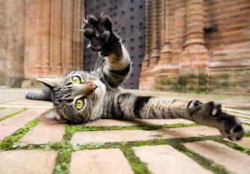 Цікаві факти про котів